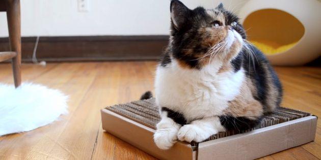 10 sposob v zrobiti kogtetochku dlya k shki svo mi rukami 1 - 10 способів зробити когтеточку для кішки своїми руками