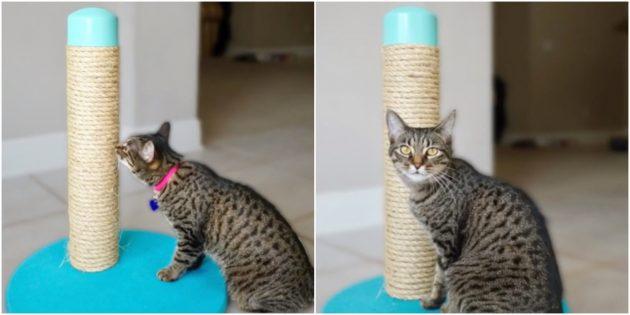 10 sposob v zrobiti kogtetochku dlya k shki svo mi rukami 15 - 10 способів зробити когтеточку для кішки своїми руками