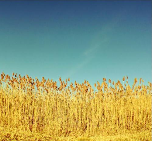 5 krutih akaunt v ayfonograferov na flickr 4 - 5 крутих акаунтів айфонограферов на Flickr