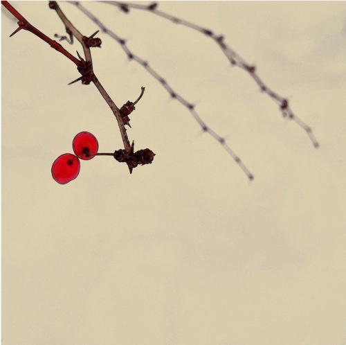 5 krutih akaunt v ayfonograferov na flickr 5 - 5 крутих акаунтів айфонограферов на Flickr